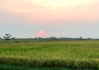 Sunset in Rice Field
