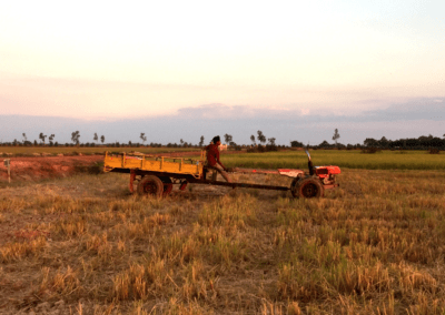 Ploughing the Rice Paddies